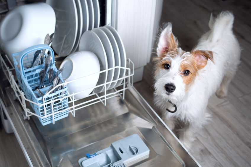 cute jack russell doggy with dishwasher mashine
